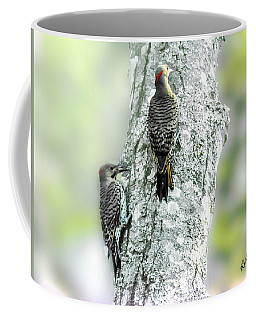 Adult And A Young Northern Flicker. Coffee Mug