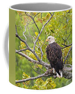 Adult Bald Eagle Coffee Mug