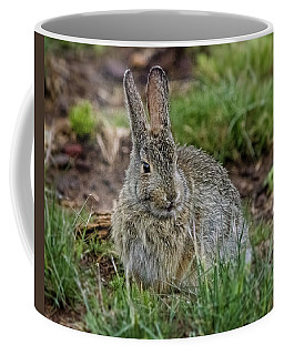 Adult Rabbit Grazing Coffee Mug