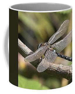 Aeshna Juncea - Common Hawker Taken At Coffee Mug