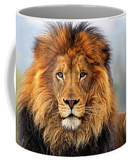 African Lion 1 Coffee Mug