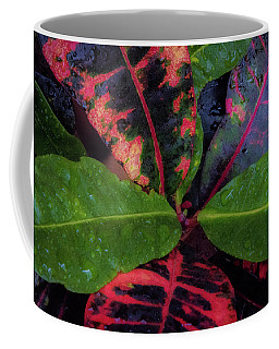 After The Rain Has Fallen Coffee Mug