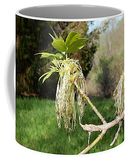 Coffee Mug featuring the photograph Ahhh Spring by Betty-Anne McDonald
