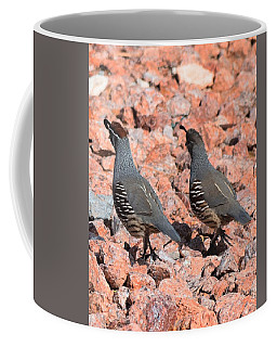 Ahhhh My Little Desert Quail Coffee Mug by John Glass