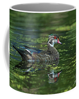Coffee Mug featuring the photograph Aix Sponsa.. by Nina Stavlund