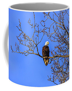 Alaskan Bald Eagle In Tree At Sunset Coffee Mug