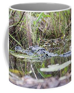 Alligator And Hatchling Coffee Mug