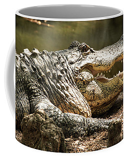 Coffee Mug featuring the photograph Alligator At Lowry Park Zoo by Richard Goldman