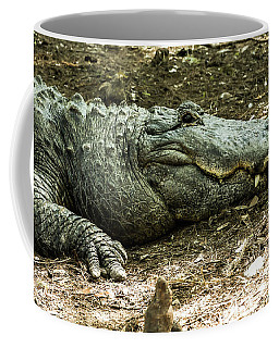 Alligator Lowry Park Zoo 3 Coffee Mug