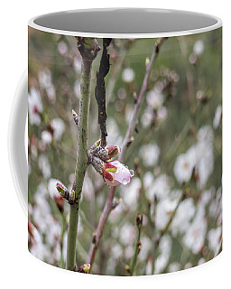 Coffee Mug featuring the photograph Almond Flower Bud On Branch After The Rain by PorqueNo Studios