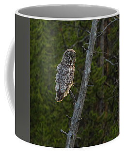 Coffee Mug featuring the photograph Almost Sundown by Yeates Photography