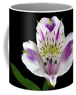 Alstroemeria Portrait. Coffee Mug