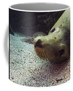 Am I Cute? Asks The Sea Lion Coffee Mug
