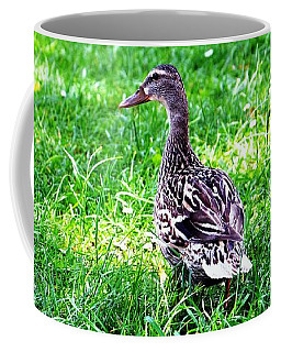 Coffee Mug featuring the photograph Am I Cute Or What by Ramona Matei