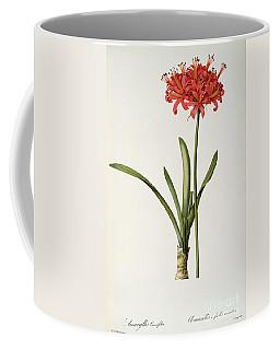 Amaryllis Curvifolia Coffee Mug