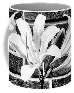 Amaryllis Inspiration Coffee Mug