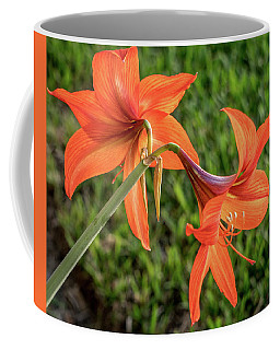 Amaryllis Coffee Mug by Jane Luxton