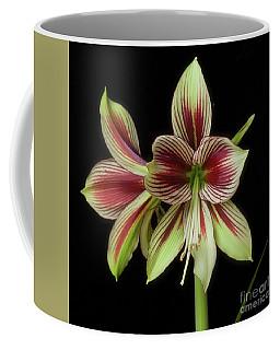 Amaryllis 'papilio Improved' Coffee Mug