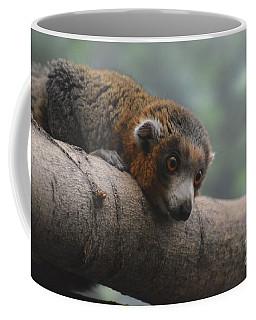 Amazing Brown Lemur With His Head On A Log Coffee Mug