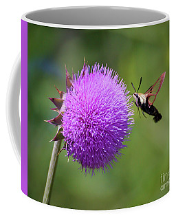 Coffee Mug featuring the photograph Amazing Insects - Hummingbird Moth by Kerri Farley