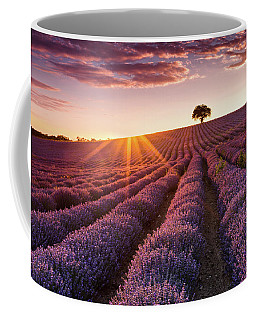 Amazing Lavender Field At Sunset Coffee Mug