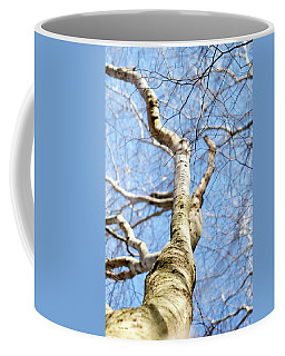 Coffee Mug featuring the photograph American Beech Tree by Christina Rollo