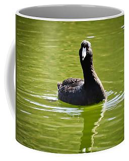 American Coot Portrait Coffee Mug