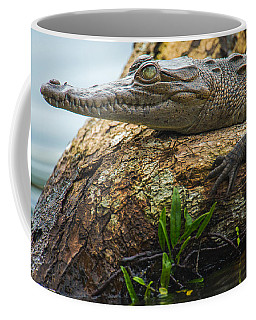 American Crocodile Crocodylus Acutus Coffee Mug