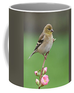 Coffee Mug featuring the photograph American Goldfinch by Doug Herr