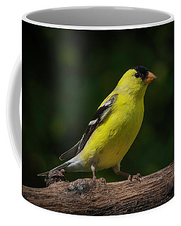 American Goldfinch Male Coffee Mug