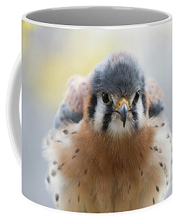 American Kestrel 1 Coffee Mug