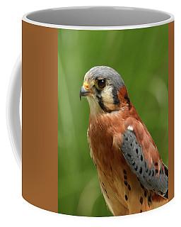 American Kestrel Coffee Mug by Ann Bridges