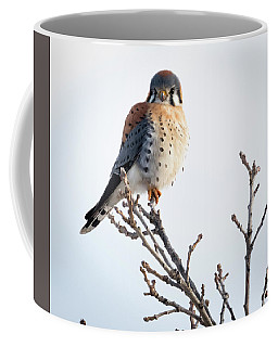 American Kestrel At Bender Coffee Mug