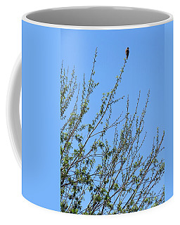 American Kestrel Atop Pecan Tree Coffee Mug