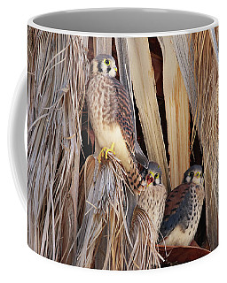 American Kestrels Coffee Mug by Dan Redmon