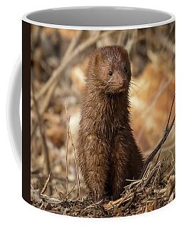 American Mink At Johnson Park Coffee Mug