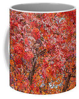 American Mountain Ash In Autumn Coffee Mug by Sue Smith