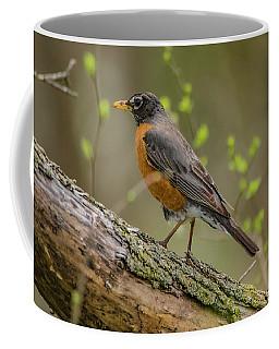American Robin Coffee Mug by Ray Congrove