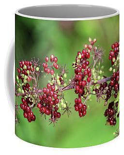 American Spikenard Coffee Mug