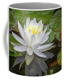 American White Water Lily Coffee Mug