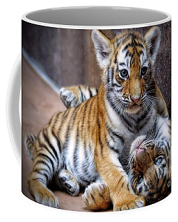Amur Tiger Cubs Coffee Mug