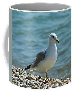 Coffee Mug featuring the photograph An Afternoon Stroll by Sally Sperry