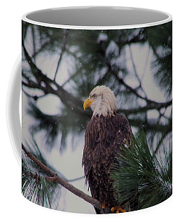 Coffee Mug featuring the photograph An Eagle In Pine  by Jeff Swan
