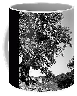 Ancient Oak, Bradgate Park Coffee Mug