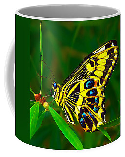 Anise Swallowtail Butterfly Coffee Mug