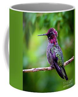 Anna Humming Bird Coffee Mug