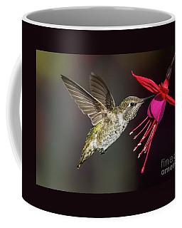 Anna Immature Hummingbird Coffee Mug