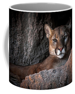 Coffee Mug featuring the photograph Annoyed Look by Elaine Malott