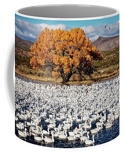Annual Snow Geese Meet-up, Bosque Del Apache, New Mexico Coffee Mug