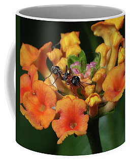Coffee Mug featuring the photograph Ant On Plant  by Richard Rizzo